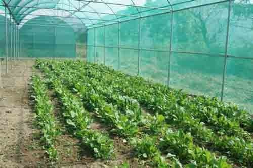 agricultural shadenet for green house